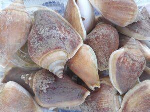 อาหารหอยชักตีน จ.กระบี่